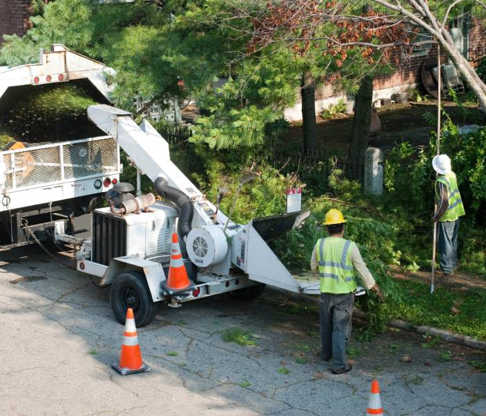 removing limbs and branches from trees in Cincinnati